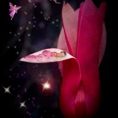 Brielle and magnolia petals
