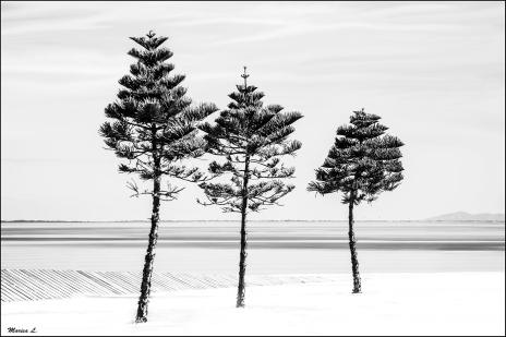 St Kilda Trees